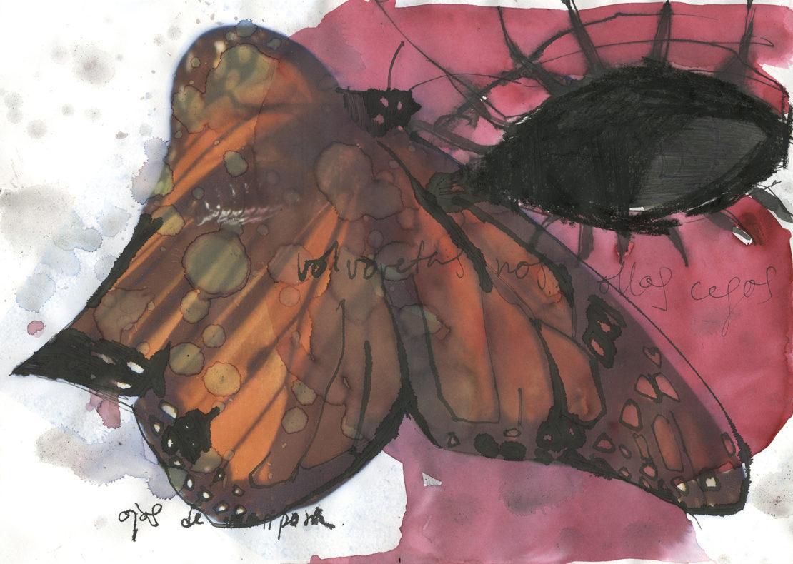 mariposa acuarela digital