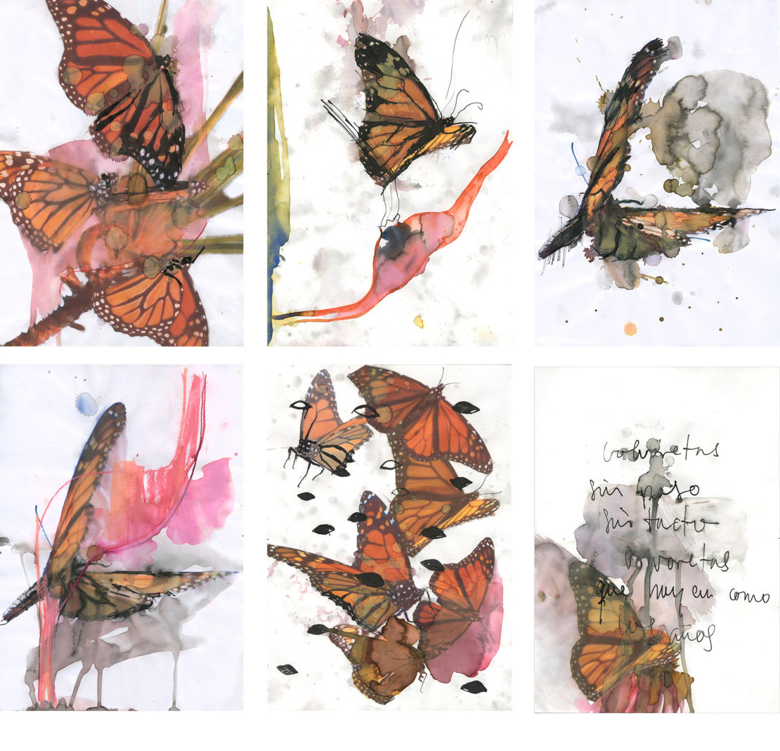 estampa digital mariposas